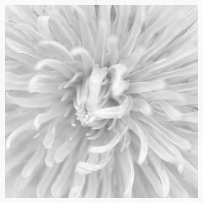 Dandelion Macro  Print by Toppart Sweden