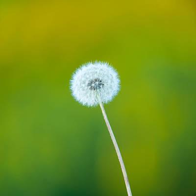 Wind Photograph - Dandelion by Sebastian Musial