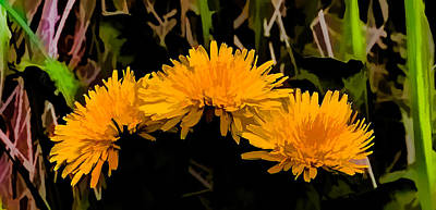 Dandelions In Group Si By Leif Sohlman Print by Leif Sohlman