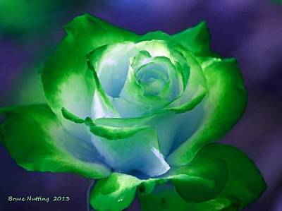 Green Painting - Dark Green And White Rose by Bruce Nutting