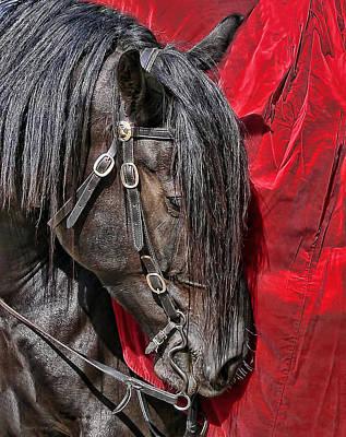 Horse Portrait Photograph - Dark Horse Against Red Dress by Jennie Marie Schell