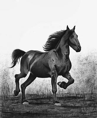 Pony Drawing - Dark Horse by Sesh Artwork