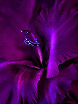 Dark Knight Purple Gladiola Flower Print by Jennie Marie Schell