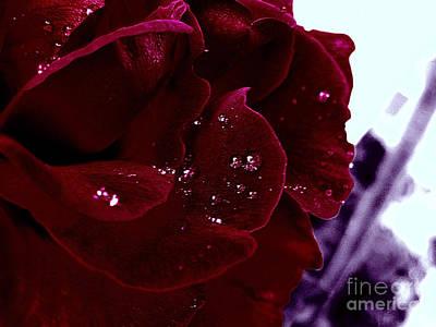 Dark Red Rose Print by Nina Ficur Feenan