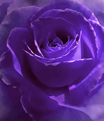 Rose Portrait Photograph - Dark Secrets Purple Rose by Jennie Marie Schell