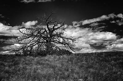 Photograph - Dark Tree by Tony Boyajian