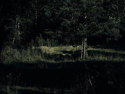 Dark Woods Print by Alexei Biryukoff