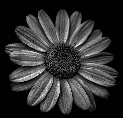 Growth Photograph - Darkened Daisy by Martin Newman