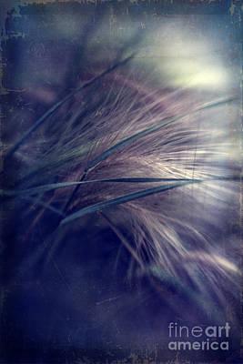 Lensbaby Photograph - darkly series I by Priska Wettstein