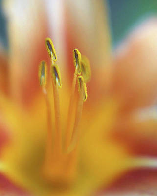 Day Lily Abstract Print by Anna Miller