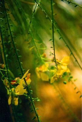 Photograph - Daydream by Robert Bray