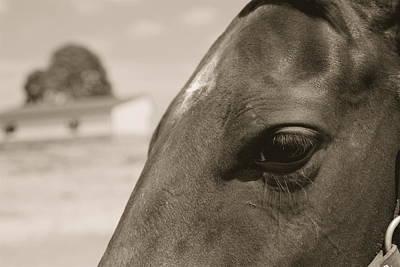 Caballero Photograph - Daydreamer by Scott Collin