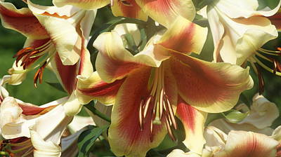 Daylily Cluster. Print by Rob Luzier