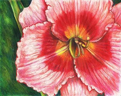 Daylily Delight Print by Shana Rowe Jackson