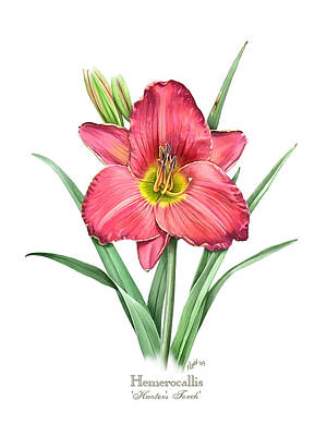 Lily Painting - Daylily Hunters Torch by Artellus Artworks