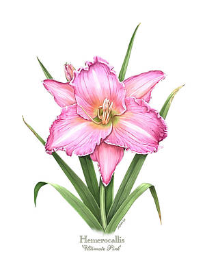 Lily Painting - Daylily Ultimate Pink by Artellus Artworks