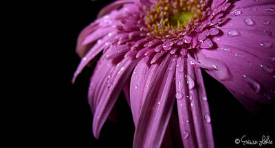 Dazzling Daisy Print by Evewin Lakra