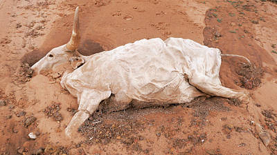 Senegal Photograph - Dead Cow by Thierry Berrod, Mona Lisa Production