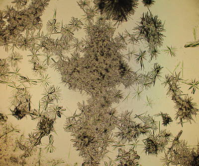 Psychedelic Photograph - Dead Flowers by Hodges Jeffery