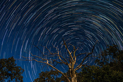 Dead Oak With Star Trails Print by Paul Freidlund