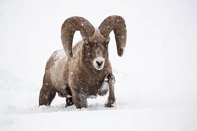 Snow Drifts Photograph - Dead Of Winter by Sandy Sisti
