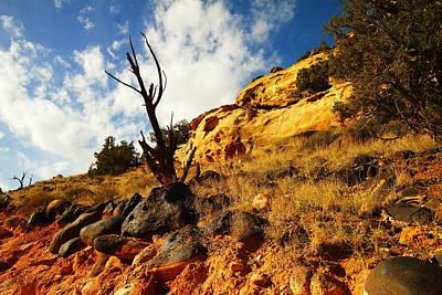 Dead Tree Against The Blue Sky Print by Jeff Swan