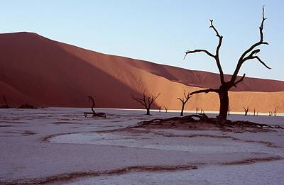 Dead Vlei Print by Stefan Carpenter