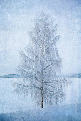 Lake Photograph - December Birch by Ari Salmela