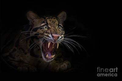 Clouded Leopard Photograph - Deceptive Expressions by Ashley Vincent