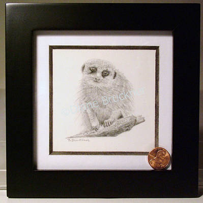 Meerkat Drawing - Deceptive Innocence by Diane Bruckner