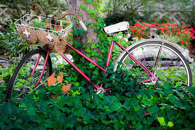 Outdoor Still Life Photograph - Decorative Bicycle  by Shelby  Young
