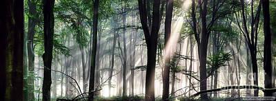 Deep Forest Morning Light Print by Simon Bratt Photography LRPS