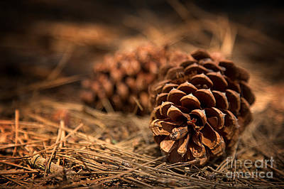 Pine Cones Photograph - Deep In The Forest by Jane Rix