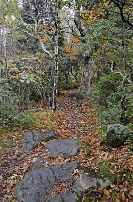 Deep In The Woods Print by Susan Leggett