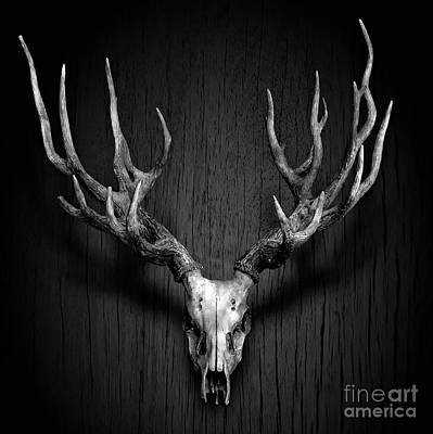 Deer Antler Hang On Wood Panel Print by Nuttakit Sukjaroensuk
