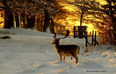 Snow Painting - Deer At Dawn by Bruce Nutting