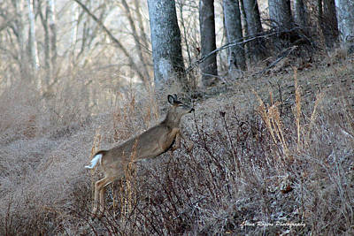 Deer Moving Upward Print by Lorna Rogers Photography