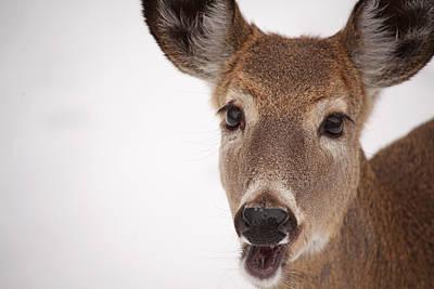 Deer Talk Print by Karol Livote