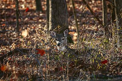 Deer Watching Falling Leaves - White-tailed Deer - Wildlife Print by Shara Lee