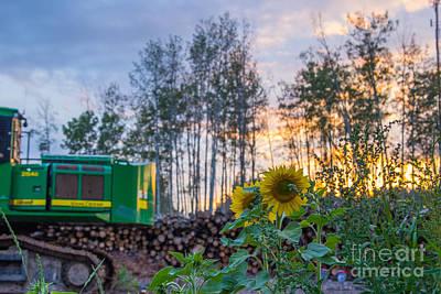 Sunflower Photograph - Deere And Suns by Alanna DPhoto