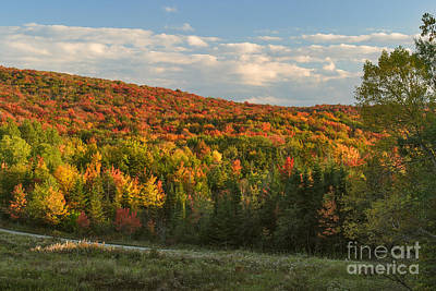 Leaf Photograph - Deerfield Valley Colors by Charles Kozierok
