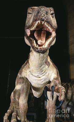 Deinonychus Dinosaur, Museum Model Print by Natural History Museum, London