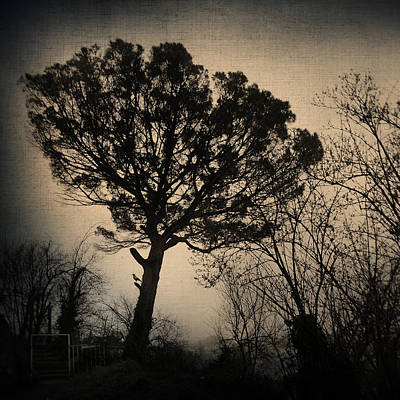 Trees Photograph - Deja Vu by Taylan Soyturk