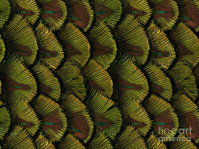 Delicate Feather Print by Bedros Awak