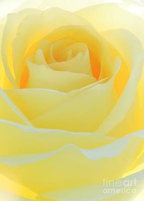 Delicate Yellow Rose Print by Sabrina L Ryan