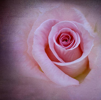 Photograph - Delicately Pink by Ivelina G