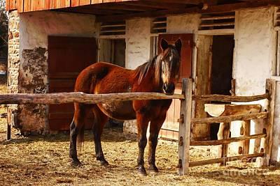 Delightful Horse Print by Marcia Lee Jones