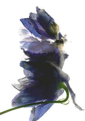 Delphinium Dance Print by Julia McLemore