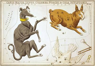 Delphinus Sagitta Aquila And Antinous Print by Celestial Images
