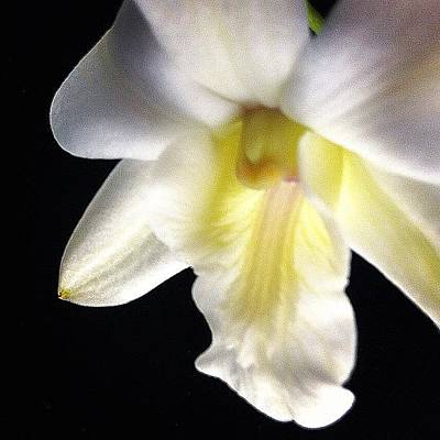 Orchids Photograph - Dendrobium #flower #orchid #floral by Art Barker